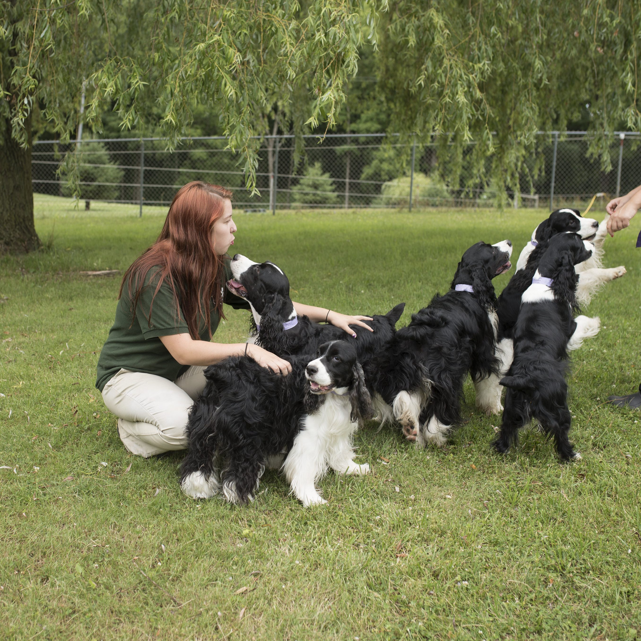 Kira and Christina with the spaniels